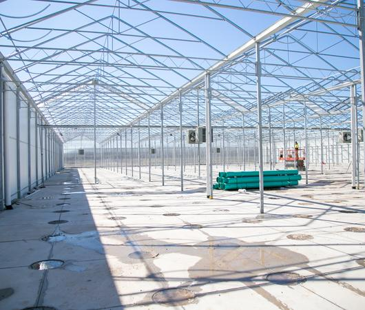 Horticultural electrical work at Redecan